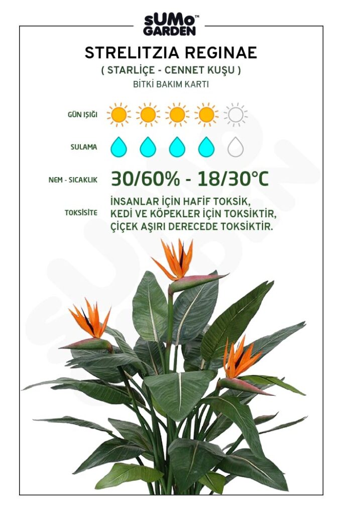 Strelitzia Reginae - Cennet Kuşu - Bitki Bakım Kartı