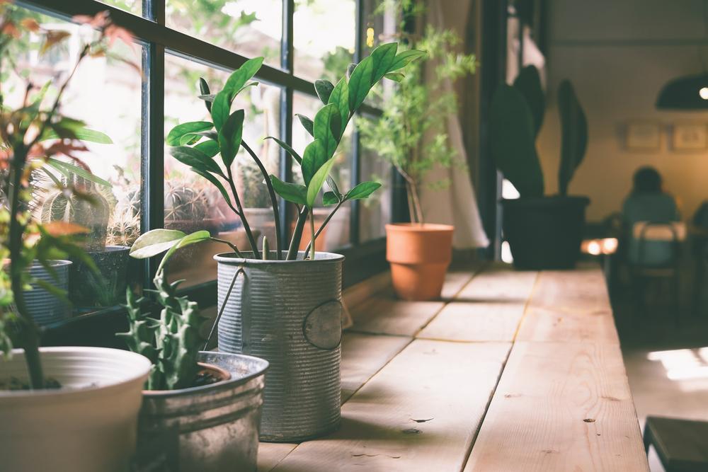 Hava Temizleyen Bitkiler