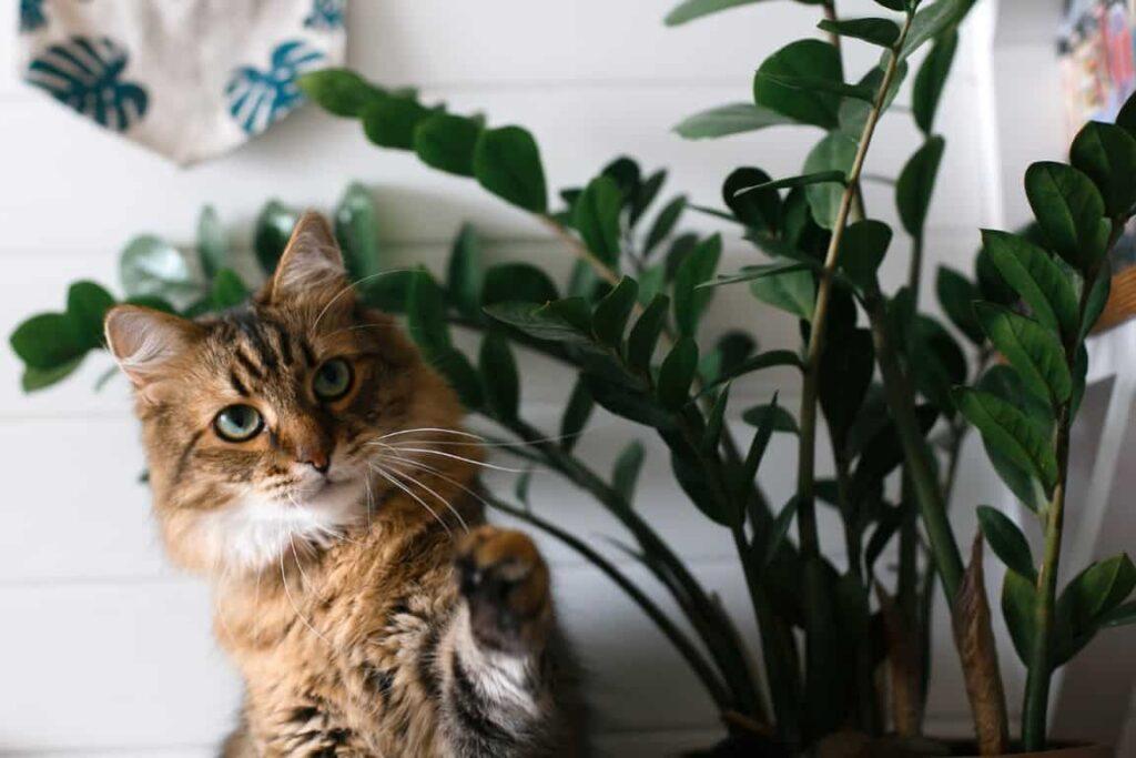 Evcil Hayvanlarınıza Zehirli Olan Bitkiler
